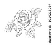 beautiful black and white rose... | Shutterstock .eps vector #1014218089