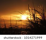 sunset over lake with reeds and ...   Shutterstock . vector #1014271999