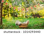 wicker brown basket with a warm ... | Shutterstock . vector #1014293440