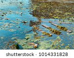 garbage in the nature ... | Shutterstock . vector #1014331828