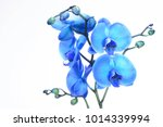 blue orchid on white background | Shutterstock . vector #1014339994