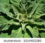 natural background. green plant ... | Shutterstock . vector #1014402280