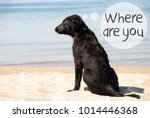 dog at sandy beach  text where... | Shutterstock . vector #1014446368