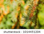 beautiful greenery as a... | Shutterstock . vector #1014451204