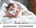 newborn baby sweet toes baby on ... | Shutterstock . vector #1014464860