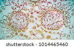 rubber leaf under the microscope | Shutterstock . vector #1014465460