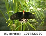 Rare Butterfly Spreads Its...