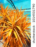 yuka plant close up  graphic...   Shutterstock . vector #1014531790