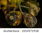 decaying gourds. end of life ... | Shutterstock . vector #1014571918