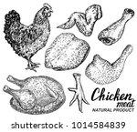 chicken meat set of vector hand ...   Shutterstock .eps vector #1014584839