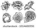 hand drawn rose etch style set. ... | Shutterstock .eps vector #1014600550