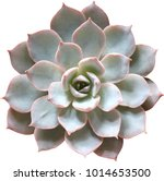 Top View Blue Succulent Is A...
