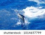 Blue Marlin Pretty