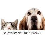 Stock photo basset hound dog and cat watching 1014692620
