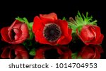 red anemone bouquet on black... | Shutterstock . vector #1014704953
