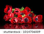red anemone bouquet on black... | Shutterstock . vector #1014706009
