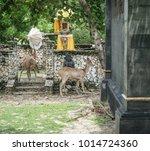 Some Animal And Wildlife Photo...