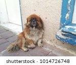 little pekingese dog sitting in ...   Shutterstock . vector #1014726748