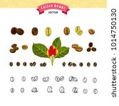 set of vector coffee beans on... | Shutterstock .eps vector #1014750130