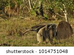 giant anteater with baby | Shutterstock . vector #1014751048