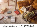 dog pug in comfortable chair in ... | Shutterstock . vector #1014753466