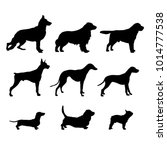 Stock vector silhouettes dog breeds 1014777538