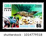Small photo of MOSCOW, RUSSIA - NOVEMBER 25, 2017: A stamp printed in Cuba shows Whiteleg Shrimp (Panaeus vannamei), Aquaculture serie, circa 2008