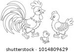 Funny Family Of A Rooster  A...