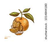 tangerine colored illustration. ... | Shutterstock .eps vector #1014844180