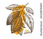 cocoa bean. engraved style... | Shutterstock .eps vector #1014845404