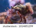 anemone hermitcrab in water | Shutterstock . vector #1014851299