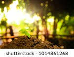 the seedling are growing in the ... | Shutterstock . vector #1014861268