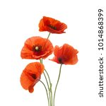 Four Red Poppies Isolated On...