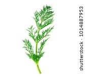 fresh dill on a white background | Shutterstock . vector #1014887953