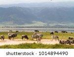 landscape of ngorongoro crater. ... | Shutterstock . vector #1014894490