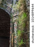 Small photo of Plant life growing on an damp Victorian viaduct structure in London, Uk.