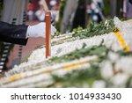 White Chrysanthemum For Korean...