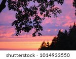 soft focused blurred nature... | Shutterstock . vector #1014933550