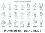 best medicinal herbs to cleance ... | Shutterstock .eps vector #1014948376