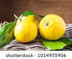 bergamot citrus fruit from... | Shutterstock . vector #1014955906