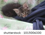 the kitten nuzzled | Shutterstock . vector #1015006330