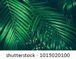 tropical jungle palm foliage ... | Shutterstock . vector #1015020100