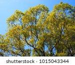tree blue sky  tree top against ... | Shutterstock . vector #1015043344