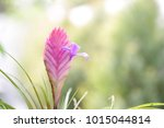 pink pineapple flower | Shutterstock . vector #1015044814