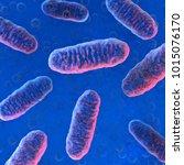 cellular organelle mitochondria.... | Shutterstock . vector #1015076170