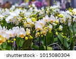 Potted Orchid Counter Store Many - Fine Art prints