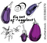 Eggplants Set. Hand Drawn...