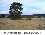 A Coniferous Tree At The...