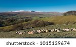 Sheep In A Snowy Landscape Of...