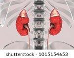 chronic kidney disease  3d... | Shutterstock . vector #1015154653